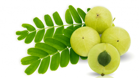 Top 8 Amla Juice Brands to Choose From